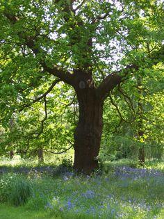Summer tree - Royal Botanic Gardens, Kew, England Kew Gardens, Botanical Gardens, Summer Trees, Spring Landscape, Tree Forest, Dream Garden, Forests, Mosaic, England