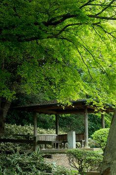 雨の日だけの、約束のない逢瀬。 ~新宿御苑~ : カメラの瞬き ~そなたは美しい~(仮)
