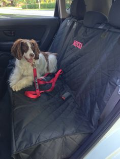 Mocha enjoys riding on her Premium Car Seat Cover... Who are we kidding ?! She enjoys the car with or without it, but we like the clean and tidy car when we use it !!  www.facebook.com/wagzwear Premium Cars, Dog Id, Lost & Found, Mocha, Car Seats, Your Style, Facebook, Cover, How To Wear