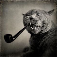 | ... photography , especially if you like cats , by Russian photographer