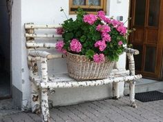 birch bench with pink geraniums. birch bench with pink geraniums.birch bench with pink geraniums.
