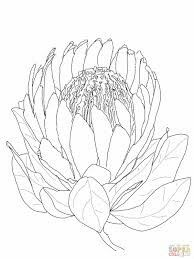Protea Flower Coloring Pages - Cute Protea Flower Coloring Pages. Explore other coloring sheets compilation for kids and toddler i - Flor Protea, Protea Art, Protea Flower, Flowers, Illustration Simple, Botanical Illustration, Drawing Sketches, Art Drawings, Flower Drawings