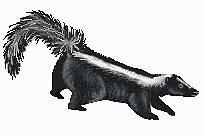 118 Best SKUNK DRAWINGS images   Skunk drawing, Skunks ...