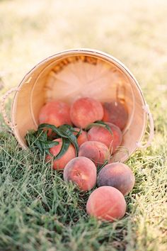 canning shoot styling / concept / florals by lovely little details photography by jessica burke published in southern weddings magazine Peach Trees, Peach Blossoms, Fresco, Shades Of Peach, Peach And Green, Peach Orange, Just Peachy, Southern Weddings, Fruits And Vegetables