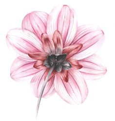 Dahlia from the back. An interesting view all round - Jarnie Godwin Art