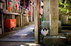 kyoto-fushimi-inari-shrine-215