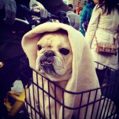 French Bulldog  or E.T.?