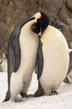 Penguins by Alexandr Petrov
