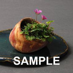 Assorted Mini Bonsai pots by hamazo on Etsy