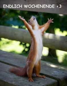 Are you looking for a super adorable squirrel meme? Make somebody's day that much brighter with a funny squirrel meme. Animals And Pets, Funny Animals, Cute Animals, Baby Animals, Smiling Animals, Funniest Animals, Wild Animals, Happy Squirrel, Funny Squirrel