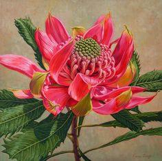 Fiona Craig, 'Red Waratah Beauty 2' oil painting + prints at www.FionaCraig.com