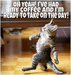 Today is your day. Cat Quotes, Animal Quotes, Animal Memes, Funny Quotes, Funny Massage Quotes, Headache Humor, Wednesday Coffee, Funny Cats, Funny Animals