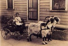 """rataliekendall: """" mosshut: """" just a friendly reminder that for over a hundred years, pit bulls used to be referred to as """"the nanny dog"""" and their main job was as babysitters. The Nanny, Nanny Dog, Pit Bulls, Vintage Dog, Vintage Children, Pull Wagon, Dogs And Kids, Pit Bull Love, Pitbull Terrier"""