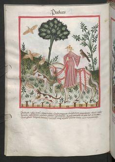 Cod. Ser. n. 2644, fol. 67v: Tacuinum sanitatis: Perdices