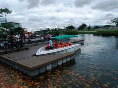 Traveling Morion: Morion's PhotoTravel Diary: Large group of Koi Fishes in Man-made lake of NUVALI PARK , Santa Rosa City, Laguna