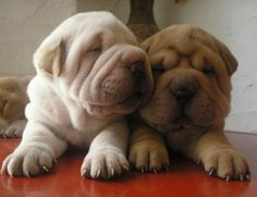 Fotos de perritos bebés para FaceBook - Imagui