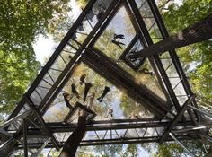 Morris Arboretum's Tree Adventure exhibit Out on a Limb, Philadelphia - Suspended 50 feet above the forest floor this network of walkways (450-feet in length) provides a bird's eye view of the forest, complete with a giant Bird's Nest, Squirrel Scramble rope, and many vista platforms.