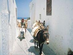 Donkeys in Lindos Rhodes Greece
