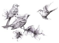 Magellin . Blog: Three sparrows and cherry blossoms
