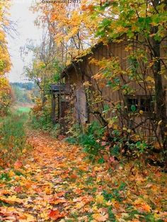 Abandoned cabin in the fall Autumn Day, Autumn Leaves, Maple Leaves, Autumn Scenes, Fall Pictures, Fall Season, Beautiful Landscapes, Beautiful Places, Scenery