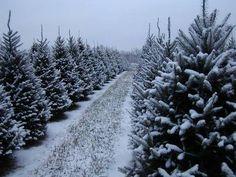 family fun in columbus ohio christmas tree farma - Christmas Tree Farms In Ohio
