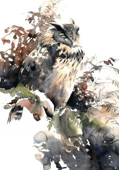 Eagle Owl, original watercolour painting for sale by wildlife artist Lucy Newton Owl Watercolor, Watercolor Animals, Watercolor Paintings, Wildlife Paintings, Wildlife Art, Animal Paintings, Illustrations, Illustration Art, Bird Artwork