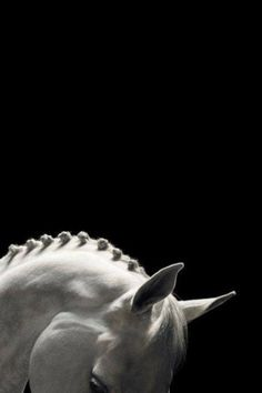 Beautiful white horse. God's creation.