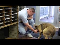 So Touching! You Have To See This Dog's Reaction To Being Rescued, I'm Almost In Tears! Please microchip your pets, even inside ones and bring them in when people are setting off fireworks. Loud noises can be very scary to pets. I Love Dogs, Puppy Love, Animals And Pets, Cute Animals, Happy End, Losing A Dog, Mans Best Friend, Dogs And Puppies, Doggies