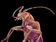 Micro Monsters: scanning electron microscope images of insects, spiders and creepy crawlies.