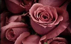 A rose wallpaper is a beautiful way to decorate your computer desktop. There are red roses but also rose petals, yellow, pink, and white roses. Marsala, Beautiful Flowers Hd Wallpapers, Pink Roses, Pink Flowers, Flower Colors, Rose Color Meanings, Pink Nature, Nature Hd, Novena Prayers