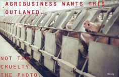 Agribusiness wants this outlawed ... not the cruelty, the photo.
