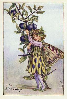 Las hadas de otoño, ilustraciones de Cicely Mary Barker  (1895-1973)