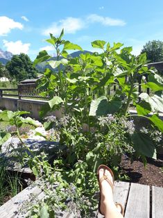 Plants, Sunlight, Plant, Planting, Planets
