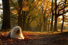 Autumn greetings  by dewollewei, via Flickr
