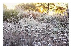 You'll Thank Me Later:  Planning For A Winter Garden