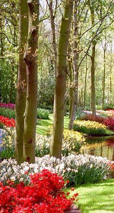 Keukenhof flower garden in Lisse, Netherlands • photo: Nicola359 on Flickr