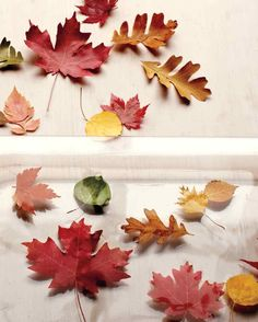 Preserving Fall Leaves - Keeping the Color ~ Soak leaves in 1 part glycerin to 2 parts water for one full day; lay out to dry.  **UPDATE: Tried this, did *not* work.  Leaves do stay flexible but are somewhat sticky & deteriorated after a while. Have not found ANY method that truly preserves their color if they're exposed to any light at all.  #DIY