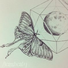 luna moth black and white drawing