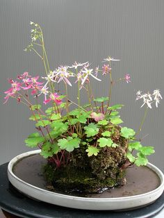 21 Best Aquascaping Design Ideas to Decor Your Aquarium - Tips Inside - Ka Miez Ⓥ - 21 Best Aquascaping Design Ideas to Decor Your Aquarium - Tips Inside DIY fish tank decorations Themes Aquascaping, Fresh Water Decor Ideas, Small Aquascaping Pond Plants, Aquatic Plants, Garden Plants, Indoor Plants, House Plants, Ikebana, Aquascaping, Indoor Water Garden, Water Gardens