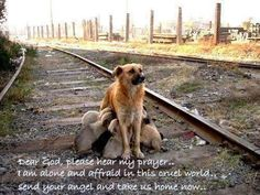 The life of a stray is sad and short :-(