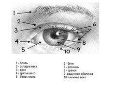Как нарисовать глаз и бровь человека карандашом поэтапно?