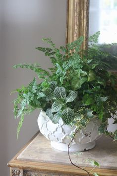 Keeping this Spring Container Garden simple and green.Ingredients: 1. Maiden Hair Fern 2. Mother Fern 3. Fittonia 4. Ivy