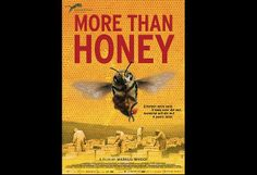 More than Honey - Markus Imhoof (Official Trailer) by CIBER Science. Searching for answers for the global bee declines director Markus Imhoof takes us on a trip around the world to meet people living with and off honeybees: almond growers in California, a Swiss mountain beekeeper, a German neuroscientist investigating bee brains, a pollen dealer in China, and bee researchers in Australia. We enter the fascinating world of a bee hive, encounter fighting queens and dancing workers face to face…