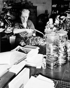 Doris Mable Cochran (1898–1968) was an #American #herpetologist and custodian of the American Natural Collection at the #Smithsonian Institution. She became the first #woman #Curator in 1956 until her retirement in 1968 on her 70th birthday. She studied art at the Corcoran Art School and developed her talents as an #artist, becoming a scientific #illustrator not only for her own works, but also for those of her colleagues.