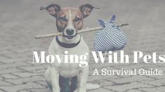Red Bandanna Pet Food: How To Move With Pets: A Survival Guide
