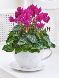 View our complete range of flower bouquets from Mimosa Flowers Belfast, Dublin, Cork, Fall Flowers, Flower Pots, Flower Arrangements, Tea Cups, Bouquet, Plants