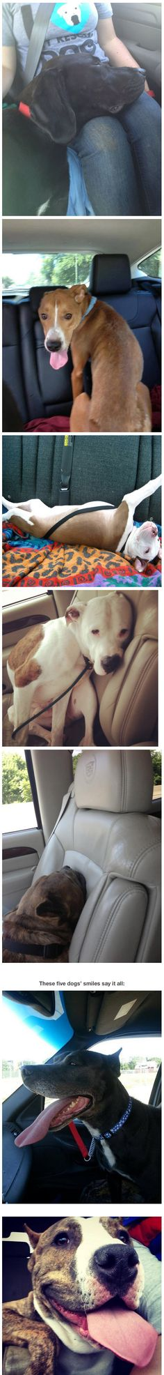 Photos of dogs taken immediately after leaving the shelter and getting in their new car.
