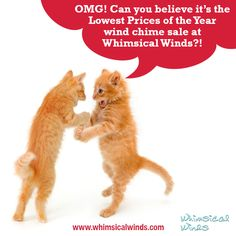 Photoshop Basics: How to Make a Really Funny Cat Meme Happy Animals, Cute Funny Animals, Funny Cute, Really Funny, Hilarious, Funniest Animals, Crazy Cat Lady, Crazy Cats, Funny Photoshop