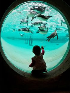 """Reach out and touch a penguin. In 2011, the London Zoo, known as """"the world's oldest zoo,"""" unveiled a penguin beach exhibit, topped by this large underwater pool. Now the zoo boasts a new title : Home of England's biggest penguin pool."""