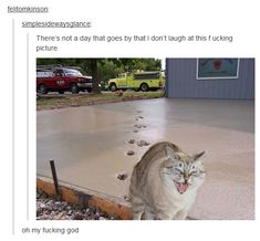 That cat is from a different picture it's photoshopped but it's funny